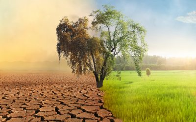 Meditations on Global Warming